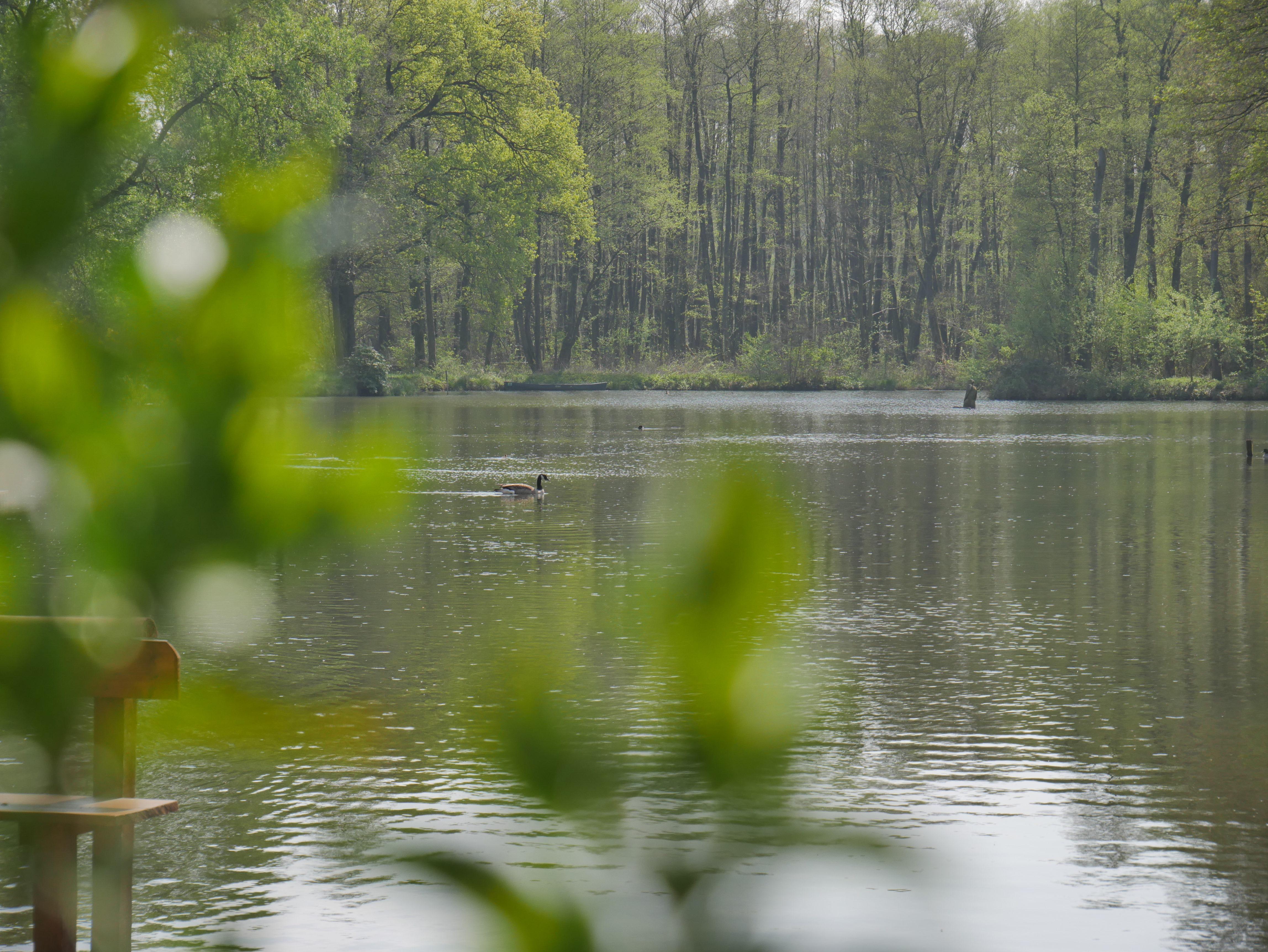 Beitragsbild Bodensee