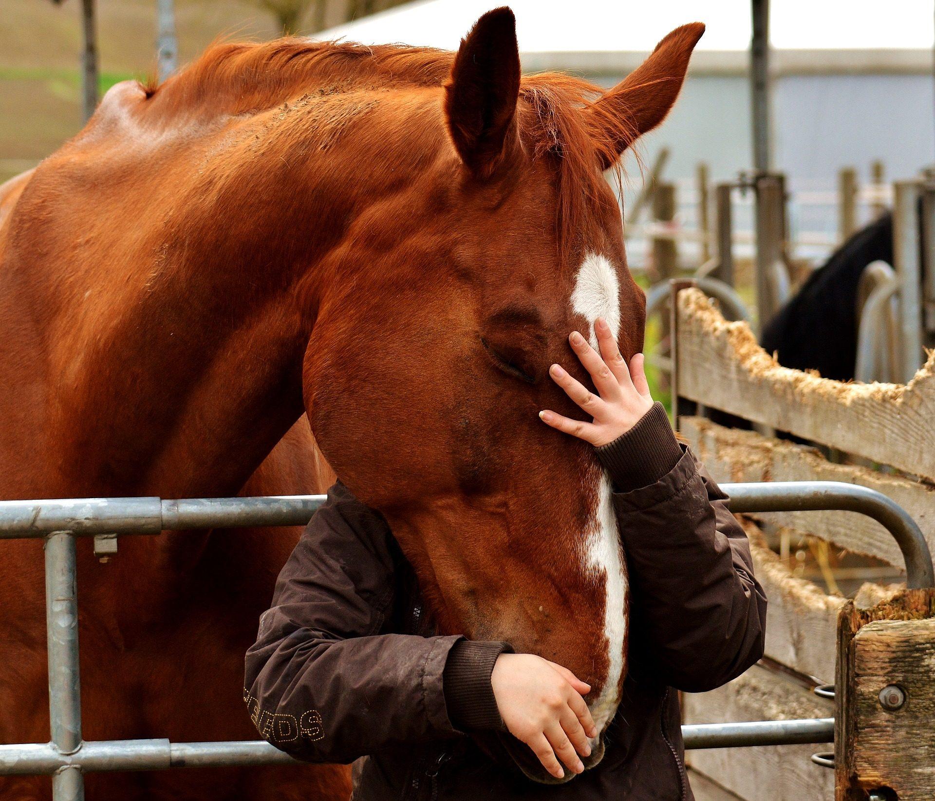 woran erkenne ich ob mich mein pferd liebt